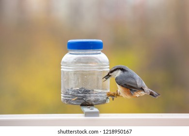 European nuthatch (Sitta europaea) - at the bird feeder. Caring for birds in the cold period. The nuthatch takes the seeds from the feeder. Bright blurred background. Wintering bird
