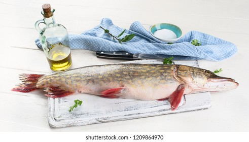 European pike. Northern Pike ( Esox Lucius ) on white wooden background