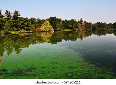 An european pond covered a lot of cyanobacteria,green biofilm grows on the water