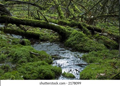 European rain-forest with fungi and peat and mosses. Jutland, Denmark