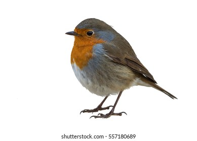 Robin Bird Images, Stock Photos & Vectors | Shutterstock on wooden bird house plans, martin bird house plans, construction bird house plans, easy bird house plans, small bird house plans, simple bird house plans, bird house dimensions plans, woodpecker bird house plans, swallow bird house plans, printable bird house plans, wren bird house plans, jay bird house plans, mansion bird house plans, flicker bird house plans, northern cardinal bird house plans, chickadee bird house plans, side mount bird house plans, house finch bird house plans, church bird house plans,