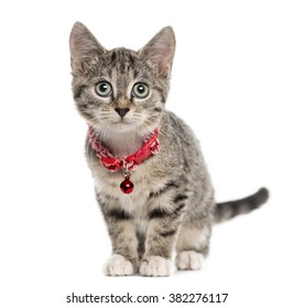 European Shorthair kitten sitting and looking at the camera, isolated on white (2,5 months old)