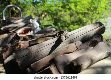 European wall lizard – Podarcis muralis