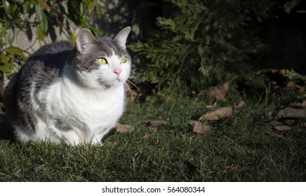 European white cat with green eyes in the garden