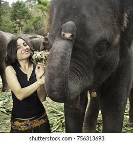 European woman tourist enjoys being with elepants on National Elephant Day in Thailand where they are treated to a huge feast.