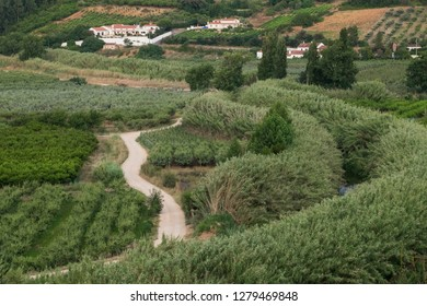 Europe,Portugal, Obidos. Walking and bike paths near the vineyards and orchards outside Obidos city center.