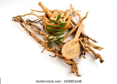 Eurycoma longifolia Jack or Tongkat Ali,roots ,green leaves and powder on white background.