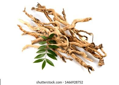 Eurycoma longifolia Jack or Tongkat Ali,roots and green leaves on white background.