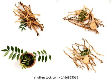 Eurycoma longifolia Jack or Tongkat Ali,roots ,green leaves and powder on white background.(image group)