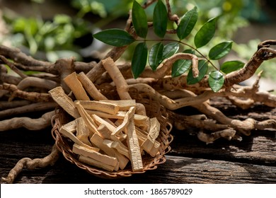 Eurycoma longifolia Jack,dried roots and green leaves on nature background.