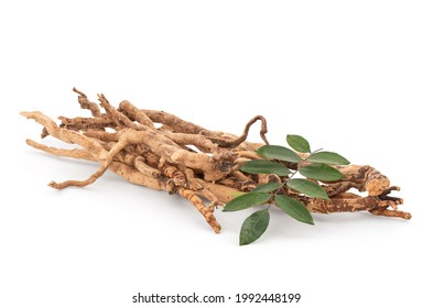 Eurycoma longifolia Jack,dried roots and green leaves isolated on white background with clipping path.