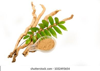 Eurycoma longifolia leafs,root on white background.