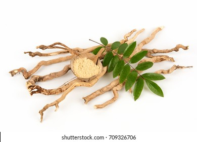 Eurycoma longifolia, roots and green leaves have medicinal properties.