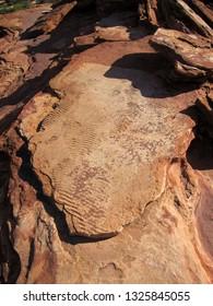 Eurypterid tracks, the beginnings of life on land, Kalbarri National Park, Western Australia