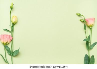 eustoma on green background. minimal flower layout. floral side frame