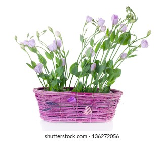Eustoma in pink basket on the white background