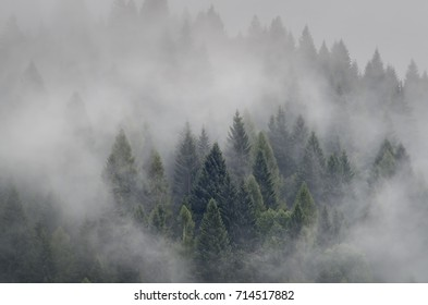 Evanescent atmosphere in the woods wrapped in mist