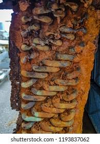 evaporator coil rusty shutterstock