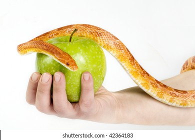 Eve temptation by snake with green apple.