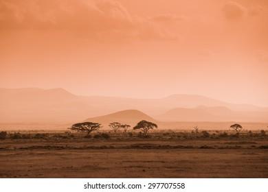 Evening african savannah