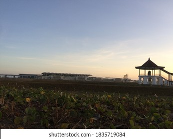 Evening at field with background nyi airport