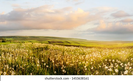 evening landscape of agricultural fields and illuminated dandelion