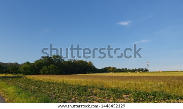 Evening Landscape Fields Blue Sky Clouds Stock Photo Edit Now 1446452129