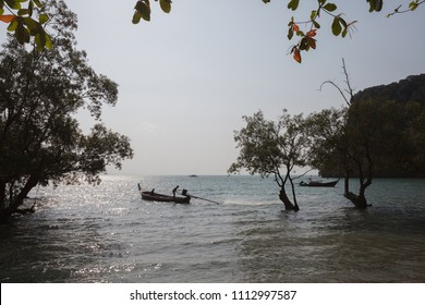 Evening landscape with mangroves. Province of Krabi. Thailand