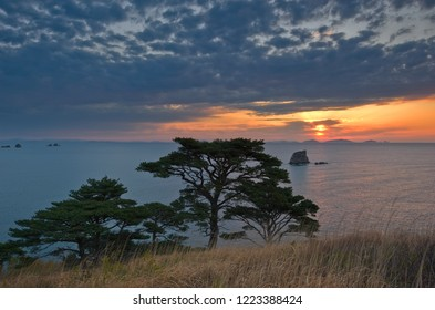 Evening landscape with pine trees on the seashore.