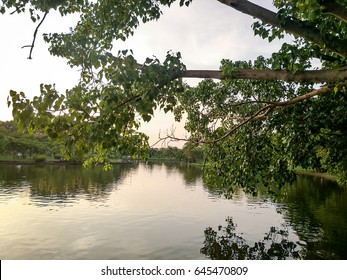 The evening landscape with trees and lake.