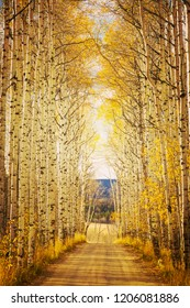 Evening light at Aspen Alley near Baggs, Wy. The famous drive through the aspen grove of the Sierra Madres is a popular spot in southern Wyoming during the fall season.