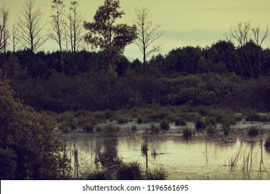 Evening mistical bog landscape in autumn at cloudy day