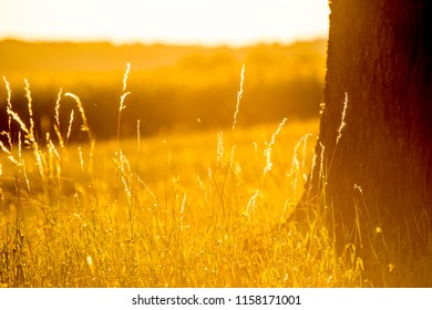 Evening mood, blades of grass and tree in the back light