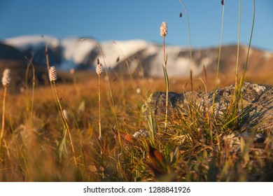 Evening in the mountains at an altitude of permafrost in tundra ecosystems