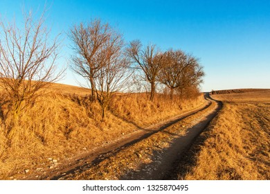 Evening on a deserted country road. Dried plum trees. Empty field path. Countryside in the Czech Republic.