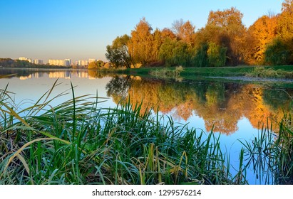 Evening on the lake, golden autumn, Moscow, Russia, Orange, brown, green trees, reflected in a lake, high grass in the foreground