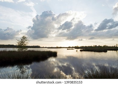 evening photo of the heathland Dwingelderveld, the Netherlands