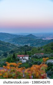 Evening pink landscape with a villa surrounded with olive trees in Alteto, Toscany