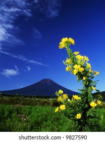 An evening primrose flower bloom with Mt,Fuji