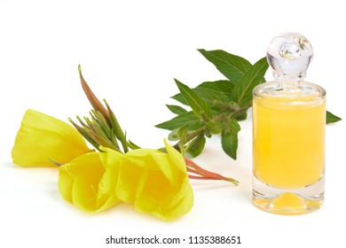 evening primrose next to bottle of yellow liquor