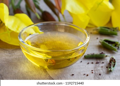 Evening primrose oil in a bowl, with fresh oenothera biennis flowers, pods and seeds in the background
