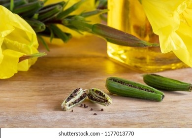 Evening primrose pods and seeds, with flowers and oil in the background