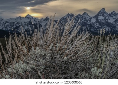 Evening sagebrush photo with the sunsetting on Grand Tetons as a background