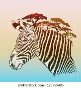 Evening savanna zebra