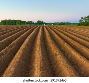Evening scene in countryside. Potatoes field after mechanized hilling