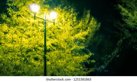 Evening scene with a lamp and a bright yellow tree at Lake Kawaguchi, one of the scenic five lakes located in the neighbourhood of the legendary Mount Fuji, Japan.