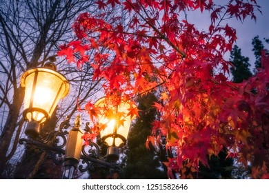 Evening scene with a lamp and a flaming red maple tree in a park at Lake Kawaguchi, one of the scenic five lakes in the neighbourhood of the legendary Mount Fuji, Japan.
