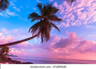 Evening Scene Sunrise Divine