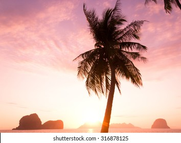 Evening Scene Tree Silhouettes