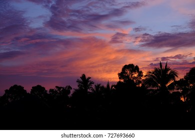 Evening sky with coconut trees  landscape